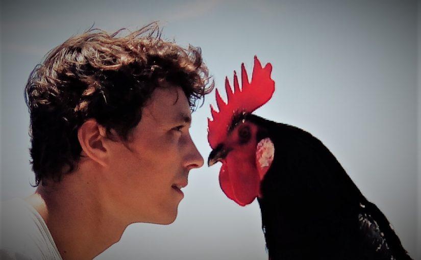 Mon point commun avec les poules