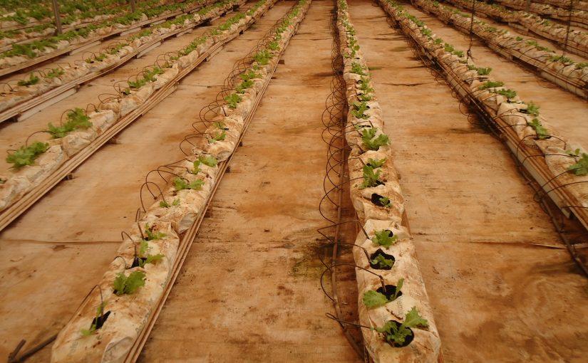 Escale au Cap Vert : Cap sur l'hydroponie et la bioponie.